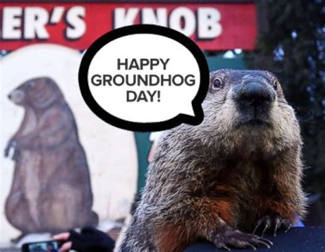 groundhog day type groundhog day 2015 photos and images abc news