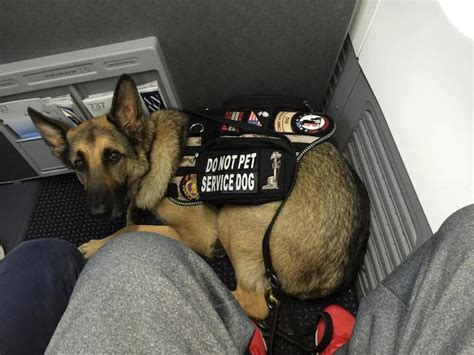 Delta Airlines Pets In Cabin by Delta S Quot No Pets Flying Cargo Quot Announcement Is Misleadingly Optimistic