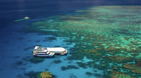 great barrier reef pontoon cairns day tours on the great barrier reef reef trip