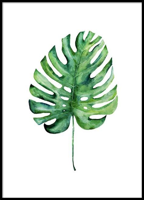 Poster Monstera monstera aquarell one poster