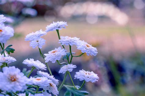 imagenes fondo de pantalla bonitas fondo de pantalla flora flores bonitas hd