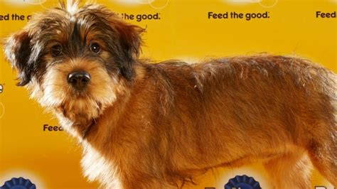 animal planet puppy bowl mvp 2016 mvp named in puppy bowl xii ign