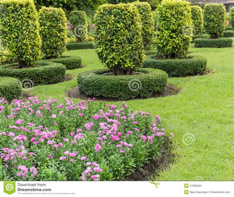decorative yard trees gardening and landscaping with decorative trees stock