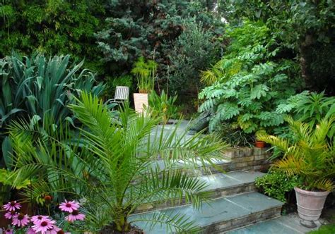 Small Tropical Garden Ideas Small Tropical Garden Ideas Photograph Tropical Pat
