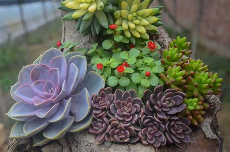 succulent plant learn about nature types of succulents learn about nature