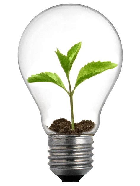 Flower Bulb Planter by Innovation Annindriya