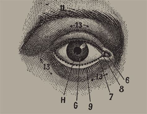 how to draw eye diagram 1000 ideas about human eye drawing on drawing