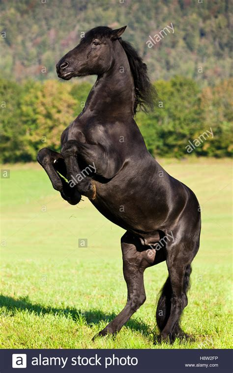 hind leg black on hind legs www pixshark images galleries with a bite