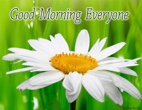 good morning images con good morning daily cards gifs and greetings
