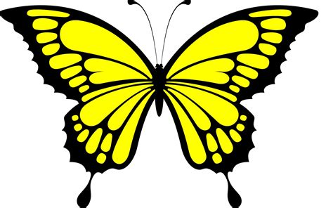 24 best yellow butterfly meaning images on yellow butterfly desktop wallpapers hd wallpapers rocks