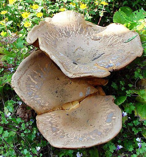 Pilze Im Garten Bestimmen by Pilz Foto Bild Pflanzen Pilze Flechten Pilze