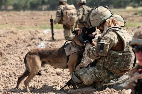 army dogs by militaryphotos on deviantart