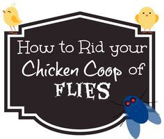 How To Get Rid Of Flies In Backyard by Hens And On 943 Pins