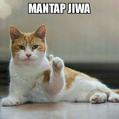 meme kucing  lucu  imut banget cak mol