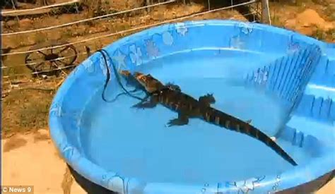 Animal Kiddie Pool Merah would you let your children swim with alligators animal sanctuary for controversial