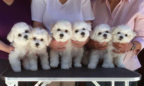 puppies at 5 weeks zeke