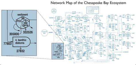 chesapeake bay food web diagram chesapeake quarterly volume 4 number 3 profile a
