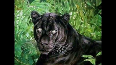 imagenes de animales carniboros los 10 animales carnivoros y mas peligrosos del mundo