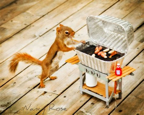 dogs doing human things photographs of a backyard squirrel doing human things