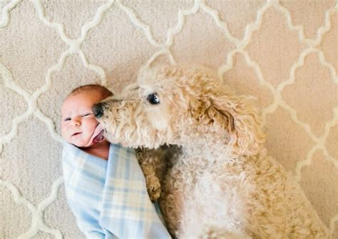 8 Reasons Why Cats Are Like Children by 8 Reasons Why You Shouldn T Own A Goldendoodle
