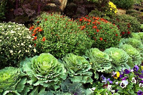 Fall Garden Flowers Grow A 1 Fall Container Garden On A 99 Gardener Budget Treehugger