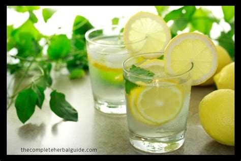 Lemon Water Detox Thc by Discover The Best Herbal Remedies For Destroying Parasites