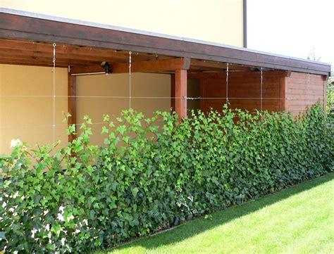 Moderner Sichtschutz Garten 1014 by Sichtschutz Zum Bepflanzen Die 25 Besten Ideen Zu