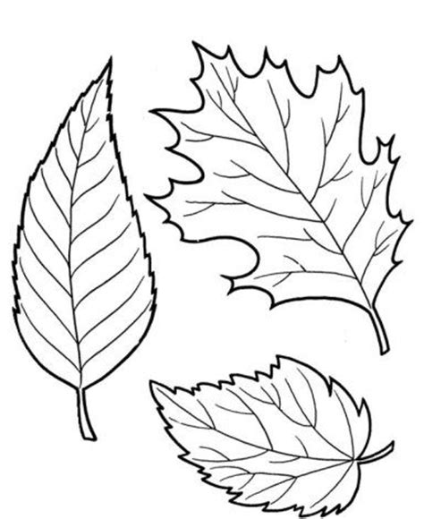 fall leaves coloring pages beautiful leaves educational