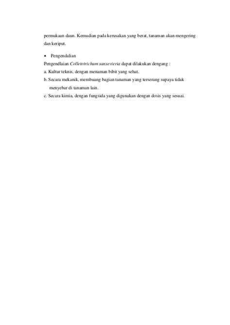 Bibit Jagung Dk 95 patogen pada jamur bulai jagung
