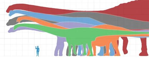 Fossil Sidney Green Whale Patchwork Nwt bruhathkayosaurus may be the sauropod known from remains that still exist may be by