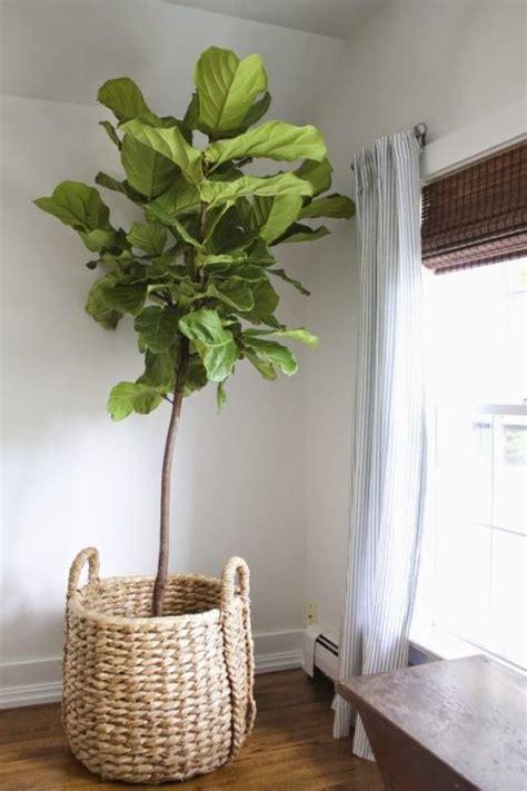 Fifties Home Decor by Kleine Geschichte 252 Ber Das Wohnen Mit Pflanzen Sweet Home