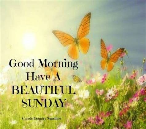 Sunday Good Morning Beautiful | good morning have a beautiful sunday days of the