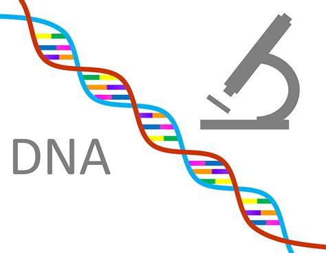 test genetica qu 233 es la 233 tica y qu 233 estudia la 233 tica cefegen