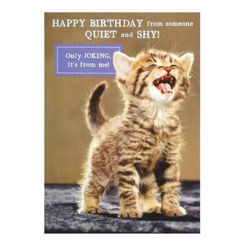 cat cards cat card 28 images i wish you cats greeting card