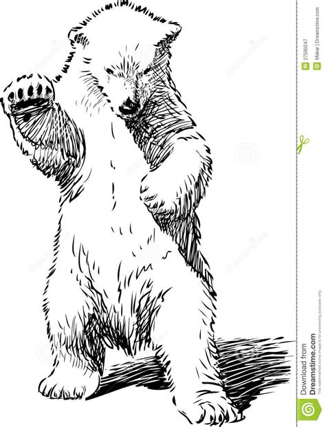 Drawing Of A Standing Up by Polar Standing Up Drawing