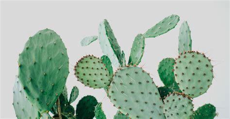 Design Bedroom Online trend kaktus k 248 benhavn boligciousboligcious