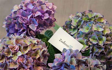 fiori recisi significato fiori recisi linguaggio dei fiori zubini