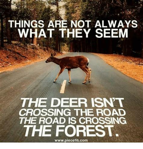 deer meme things are not always what they seem the deer isnt