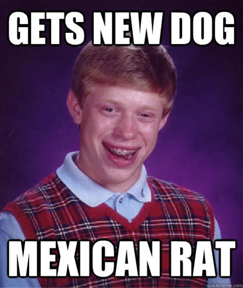Meatspin Meme - gets new dog mexican rat bad luck brian quickmeme