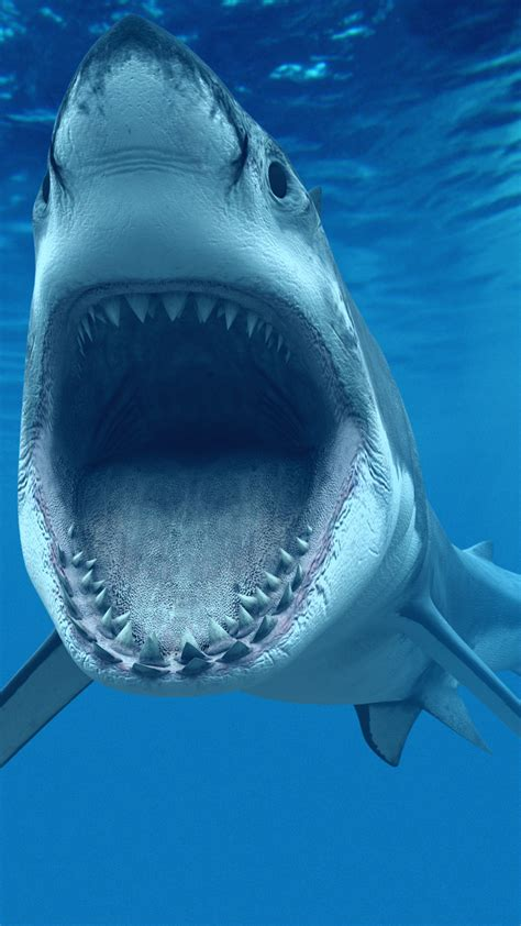 what color are sharks great white shark iphone wallpapers iphone wallpapers