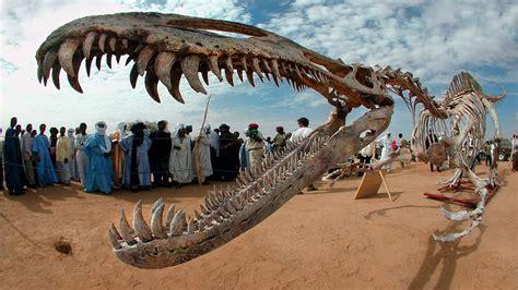 Who Find Dinosaur Bones Stunningly Intact Dinosaur Fossils Found