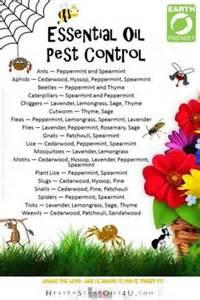 Essential Oils For Garden Pest Control - bug off amp garden essential oils on pinterest 254 pins