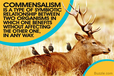 exles of commensalism for a better understanding of the