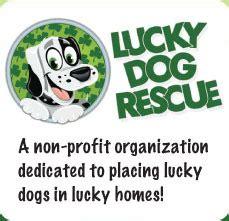 lucky rescue az lucky rescue adoptions in arizona