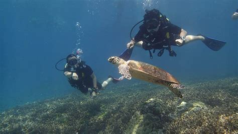 dive in discover scuba diving in phuket aussie divers phuket