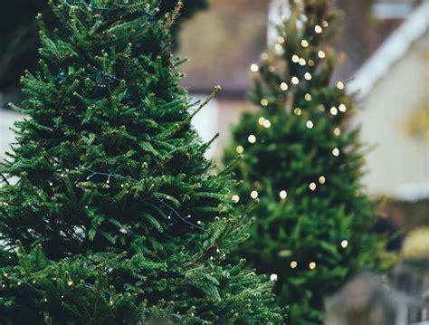 images gratuites branche plante vert 224 feuilles