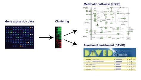 pattern lab workflow digithead s lab notebook data analysis workflow patterns