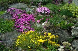 Rock Garden Plant Lizzie S Logic Plant Of The Week