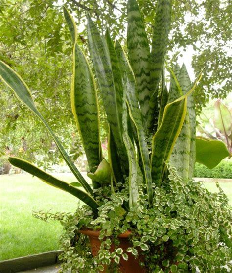 plantas de interior poca luz plantas que necesitan poca luz en el interior de casa