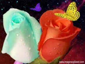 imagenes vulgares para facebok gifs de amor imagens whatsapp